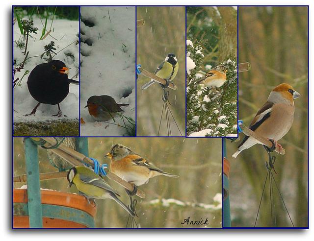 Nos petits amis sous la neige (dont deux raretés de passage : un gros bec et un pinson du Nord)