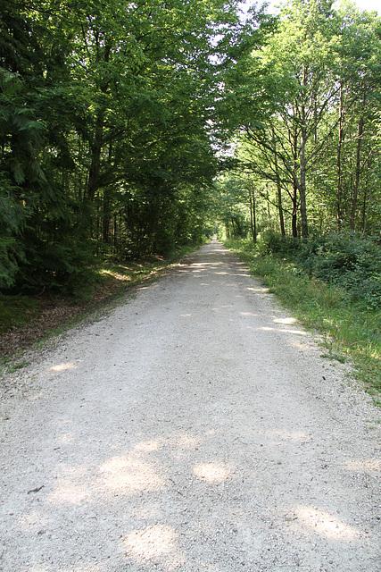Forêt de Villefermoy