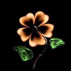 Flower par  Pol Tergejst 3 mars 2013