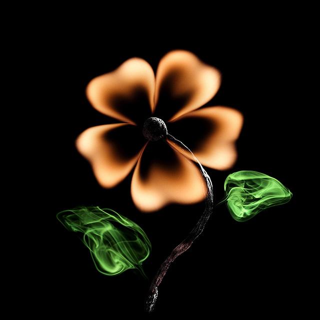"""""""Flower"""" par  Pol Tergejst"""