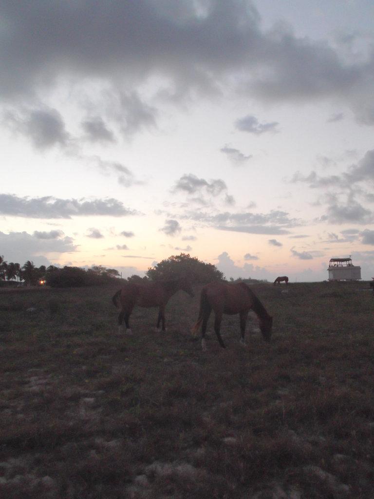 Chevaux levants / Rising horses / Caballos al amanecer - 21 avril 2012 / Éclaircie par Christiane / Lightened by Christiane.
