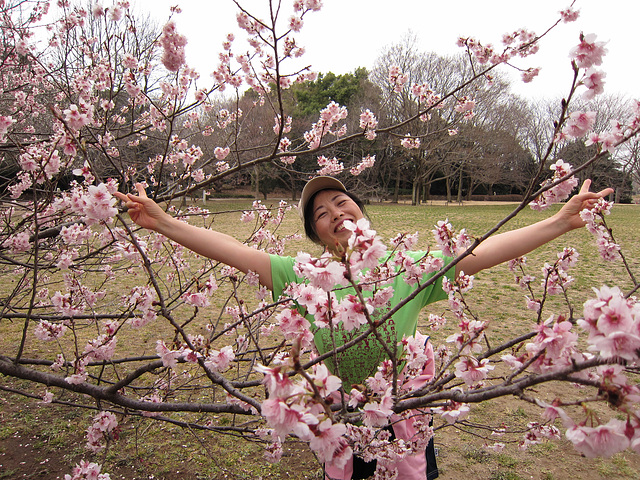 2013.3.17Saluton,miaj geamikoj!Look!Cherry blossom are in bloom!你们好!我的朋友!请看!樱花开了!
