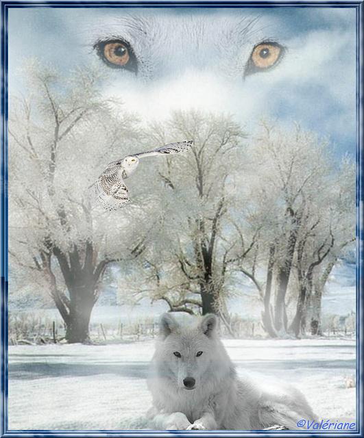 Les yeux du loup