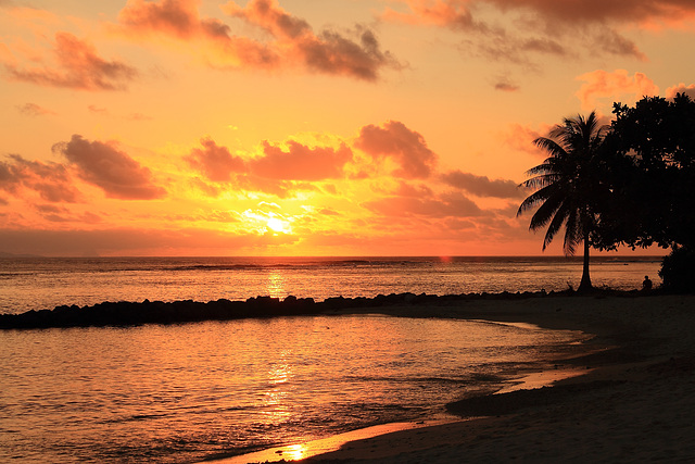 Bonne année... des tropiques