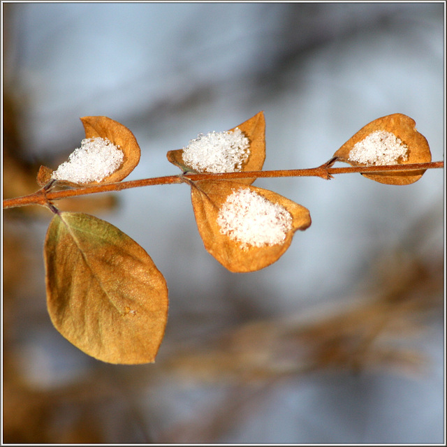 Hoffentlich der letzte Schnee !!!