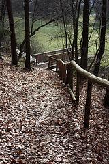 Hinein in den Wald...