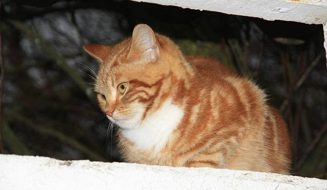 petit chat d'OLERON