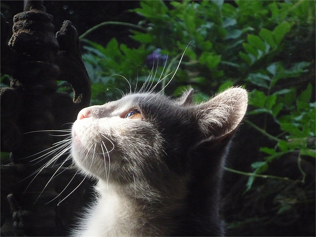 Un gato atento