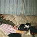 Mandi with Fred, Pani and Spot