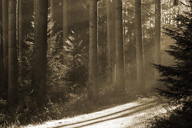 Die langen Schatten...
