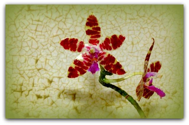 Fleur -Ceramique