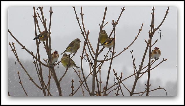 Oiseaux sous la neige