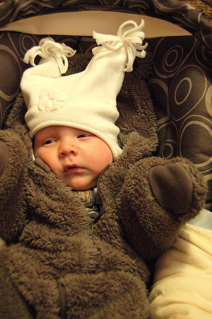 Pieter, la bruna ursido