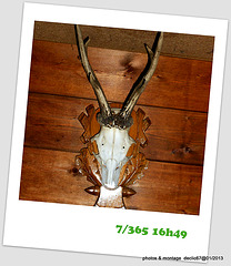 07/01.......cocu.....?ou nouvelle race d'escargot..?