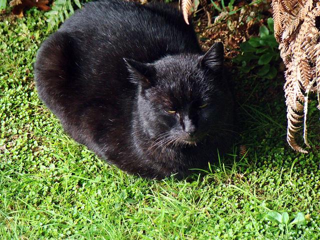 Blackie enjoying the sun