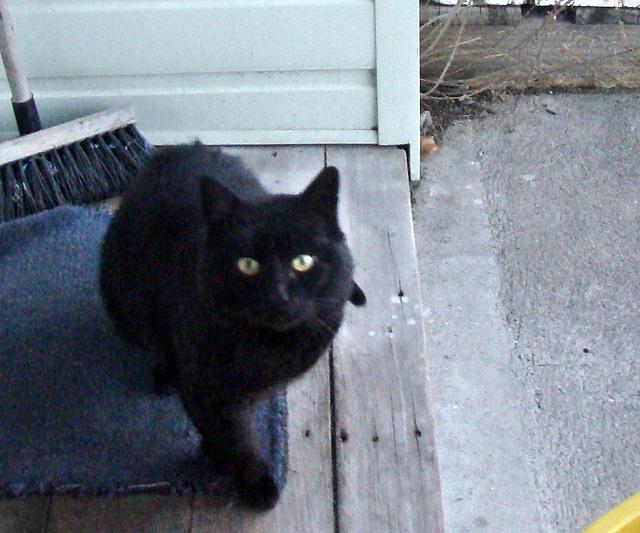 Blackie at front door