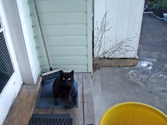 Blackie on the doorstep