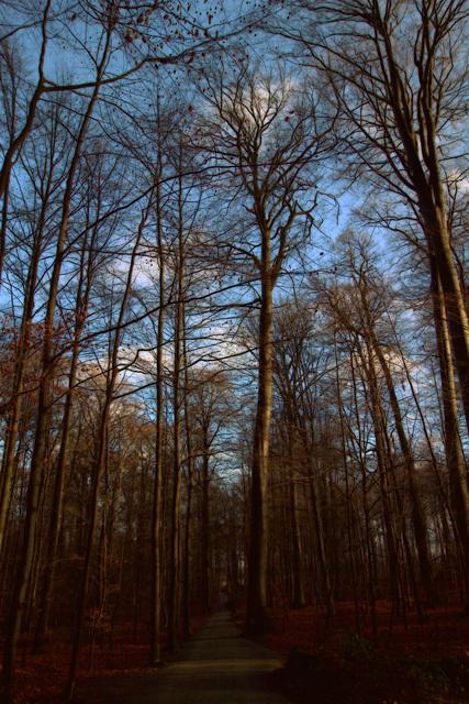 Notre forêt de Soignes