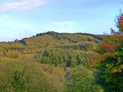 Les couleurs de l'automne s'installent doucement dans la forêt environnante