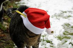 Weihnachtskater