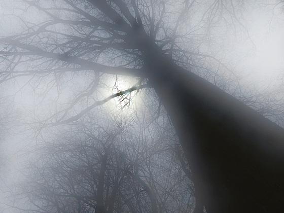 """""""dans la forêt lointaine"""" : ou le Ried enchanté"""