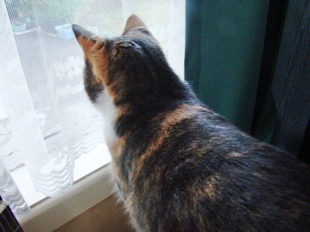 Honey looking out the window.