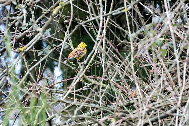 Lustiger Vogel - 130308