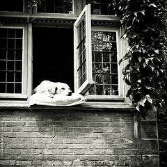Mika - Sleepin' dog