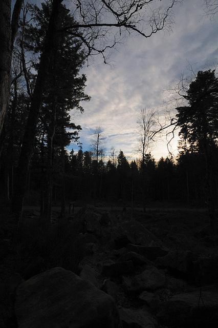 Schwarzer Wald - 121224