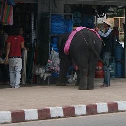 Elephant goes shopping Phitsanulok 29