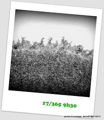 17/01....................empreinte dans la neige