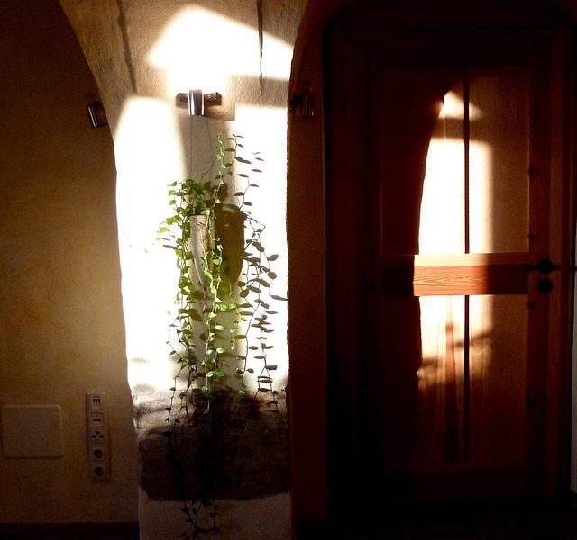 Sonnenschein im Zimmer mit Grünpflanze - sunbrilo en ĉambro kun verda planto