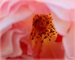 coeur de fleur printanière