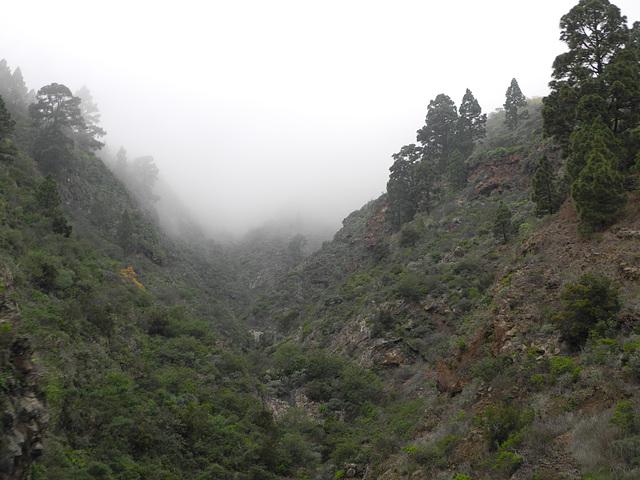 Baja la neblina por el barranco