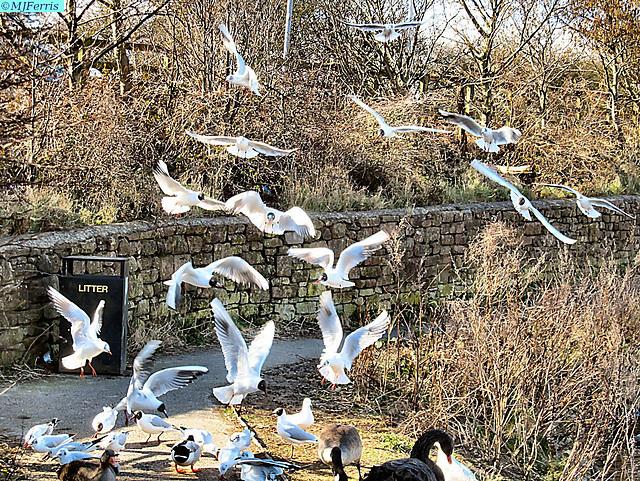 03 birds in flight
