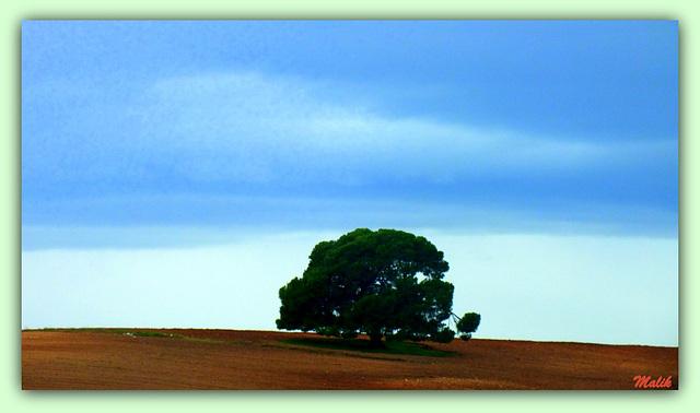 L'arbre temoin..!