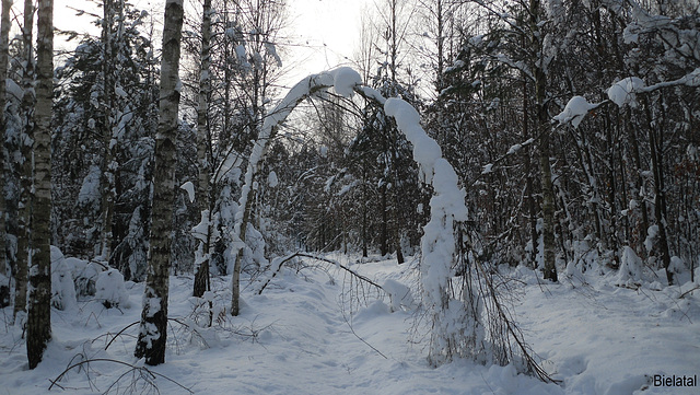 Bielatal im Schnee