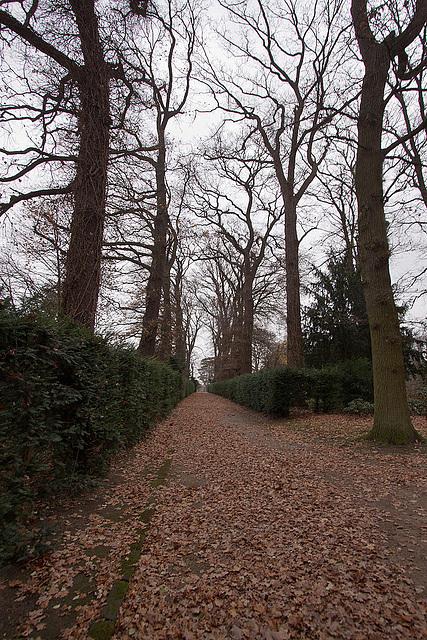 20121125 1701RWw Schlosspark