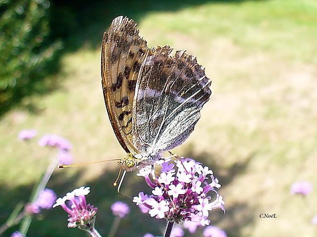 'Tit papillon!