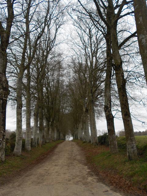 Bois d'Amour Pont Aven