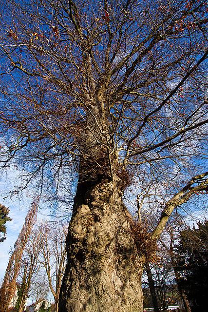 20121125 1722RWw Baum