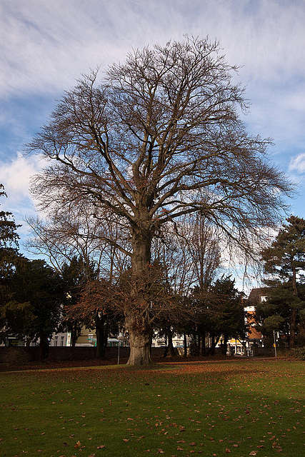 20121125 1740RWw Baum