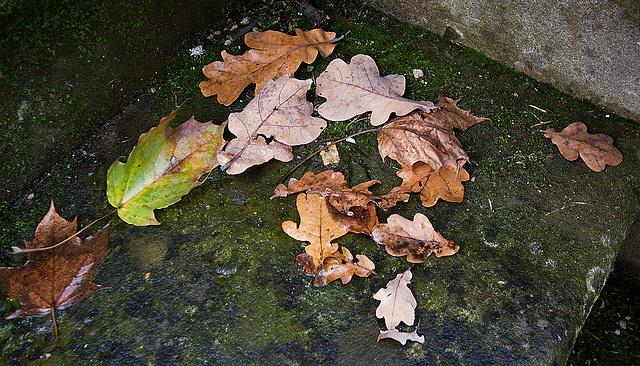 20121125 1746RWw Ahorn- und Eichenlaub