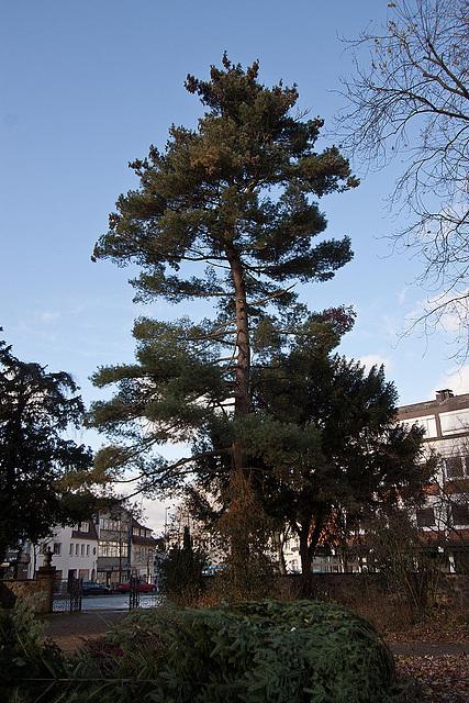 20121125 1751RWw Baum