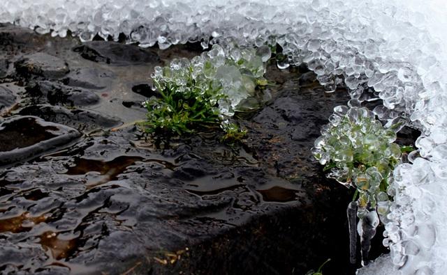 Concrétions de glace (5)