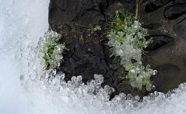 Concrétions de glace (6)