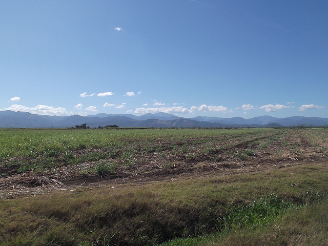 Dry crops & blue mountains / Paysage bleuté à la cubana.
