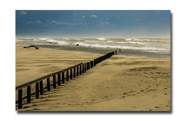 Sur la plage............une improbable rencontre.