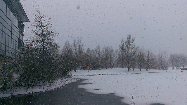 Snow at Thames Valley Park, Reading