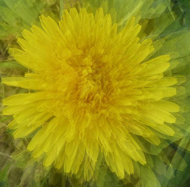Yellow, yellow ....